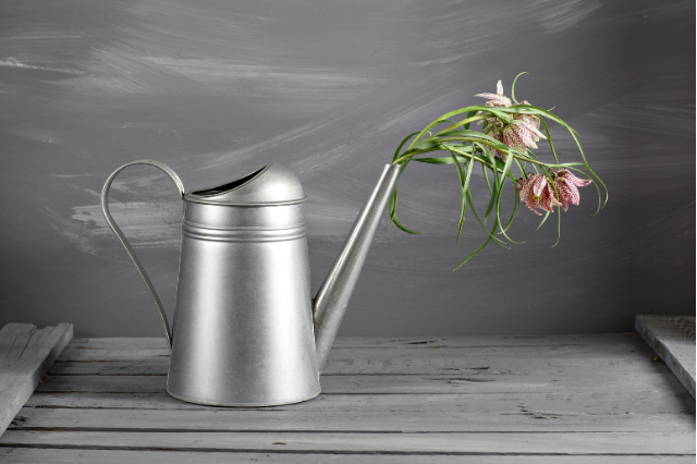 image of watering can with dead flowers